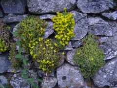 wall art - obviously this hot weather has bought forth little shy plants