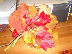 autumn leaves - inspiring